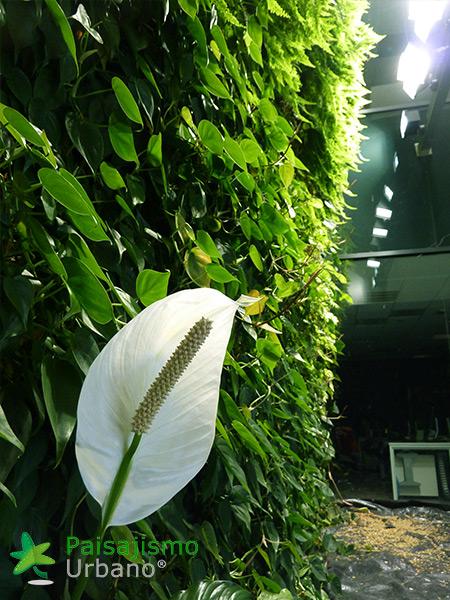 img-jardin-vertical-interior-oficinas-alicante-11