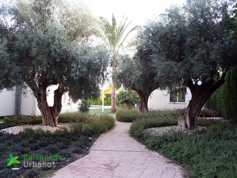 img-jardines-xerojardin-elche-5
