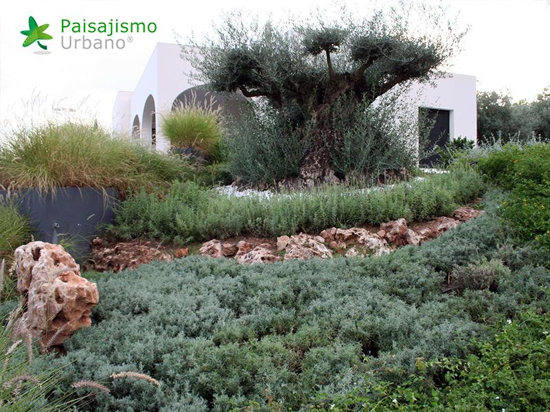 img-jardines-xerojardin-elche-7