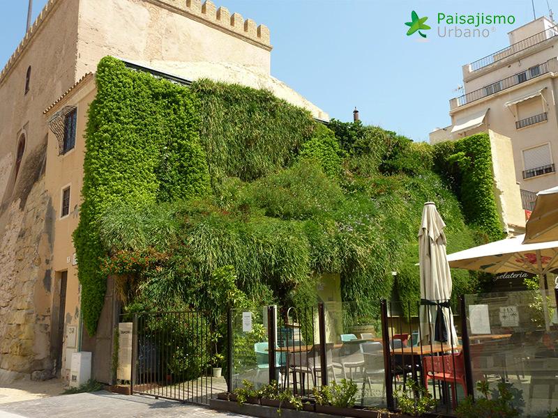 img-jardin-vertical-calahorra-elche-20