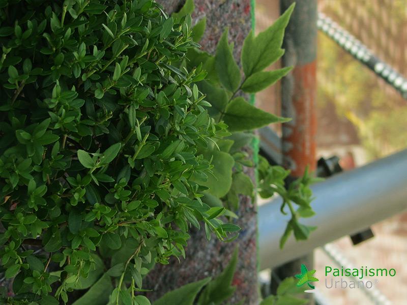 img-jardin-vertical-calle-montera-madrid-12
