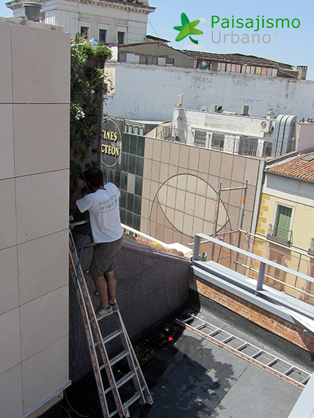 img-jardin-vertical-calle-montera-madrid-14