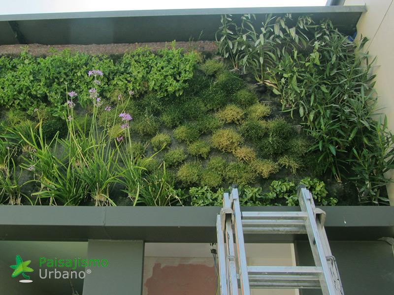 img-jardin-vertical-calle-montera-madrid-16