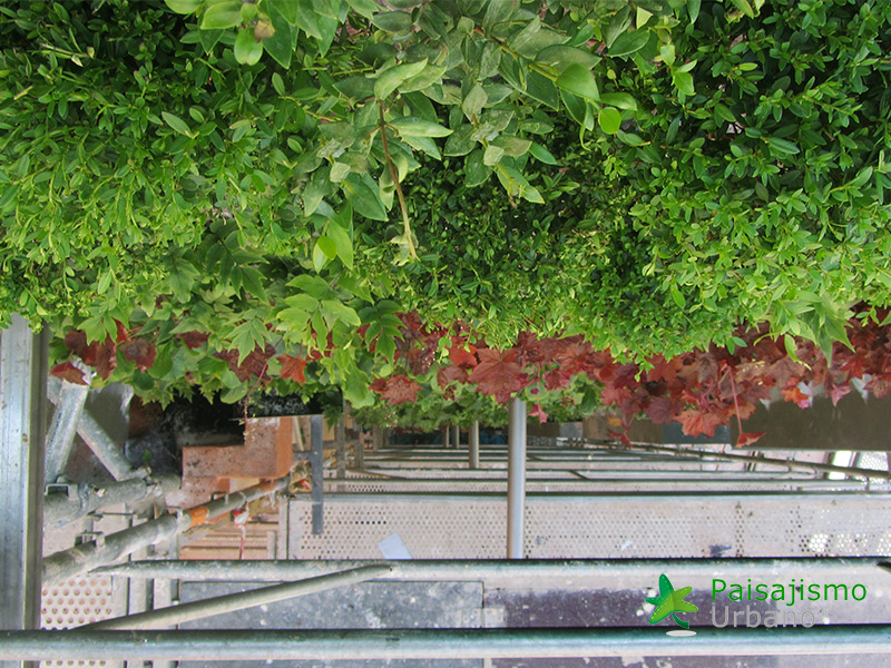 img-jardin-vertical-calle-montera-madrid-17