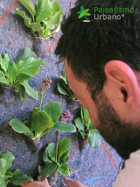 img-jardin-vertical-calle-montera-madrid-6