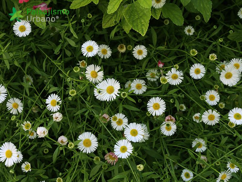 img-jardin-vertical-grupo-marjal-guardamar-alicante-16