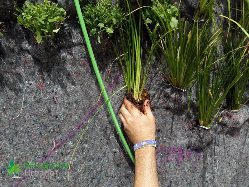 img-jardin-vertical-grupo-marjal-guardamar-alicante-5