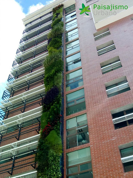 img-jardines-verticales-guatemala-edificio-crece-12