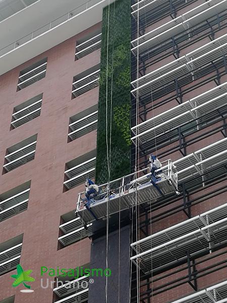 img-jardines-verticales-guatemala-edificio-crece-4