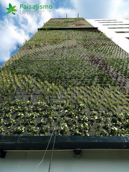 img-jardines-verticales-guatemala-edificio-crece-5