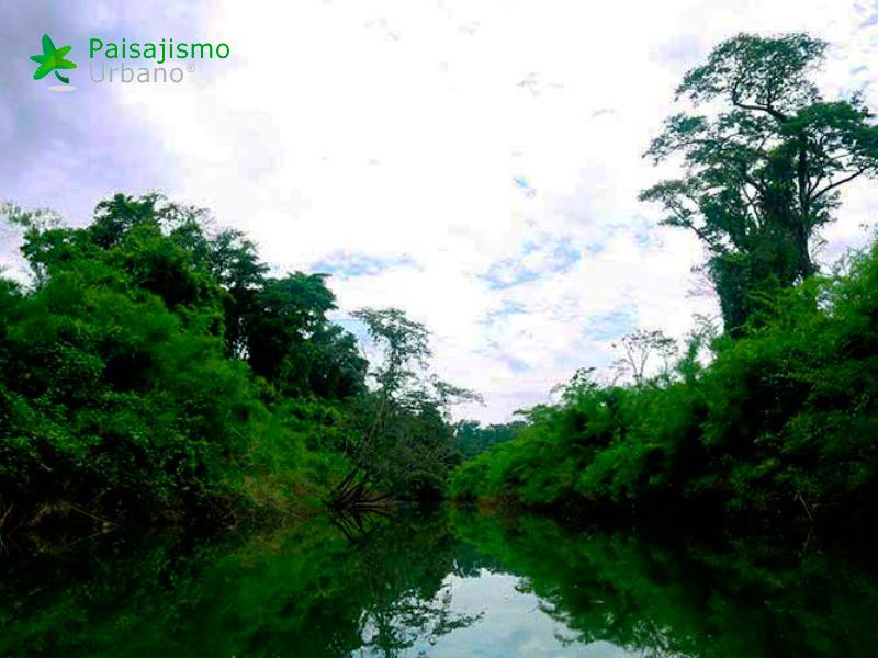 Lacandona-reducida10
