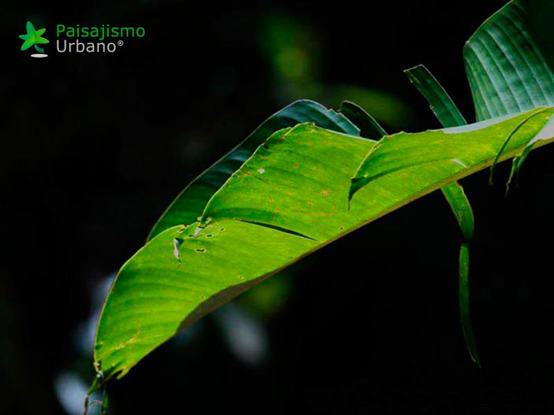 Lacandona-reducida9