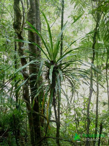 Madagascarreducida13