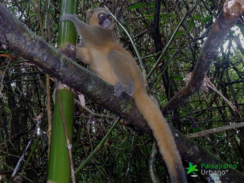 Madagascarreducida16