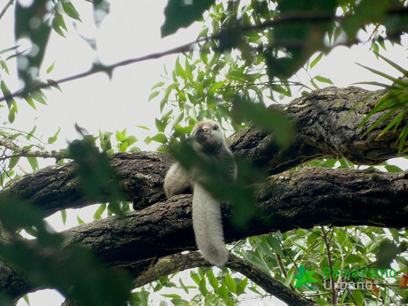 Madagascarreducida24