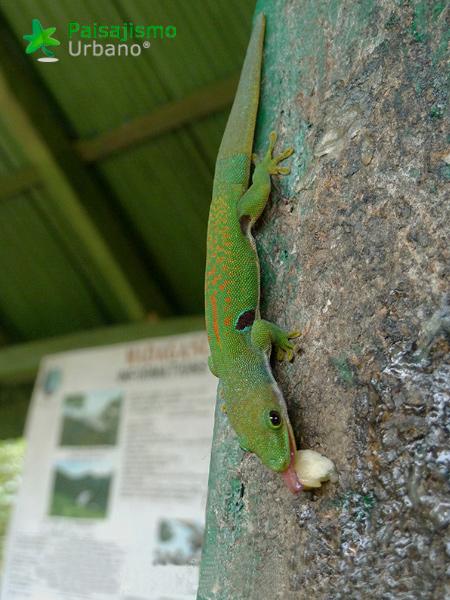 Madagascarreducida25