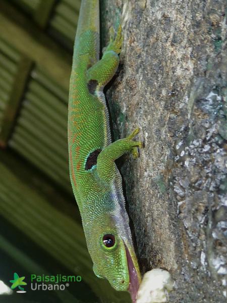 Madagascarreducida26