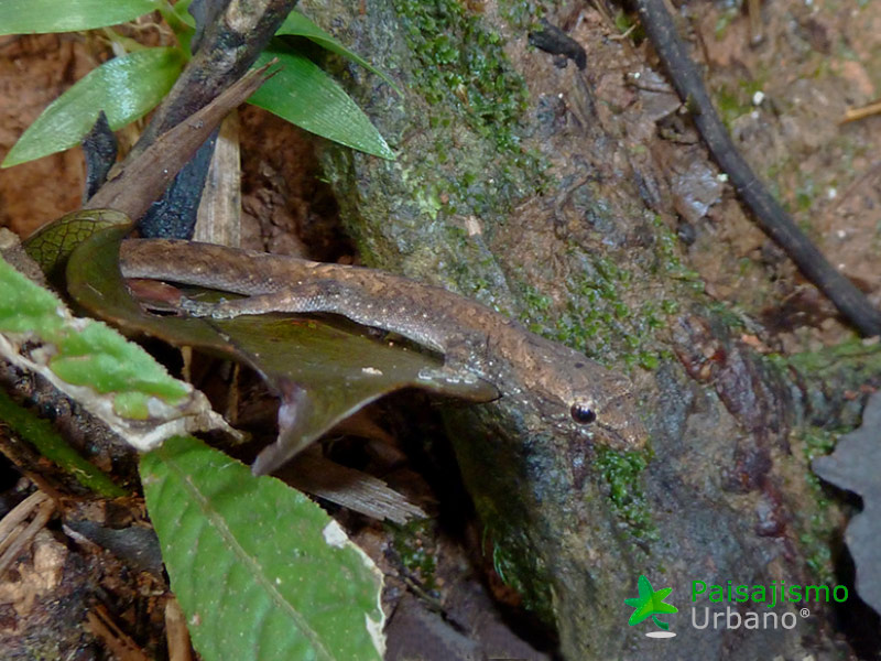 Madagascarreducida29