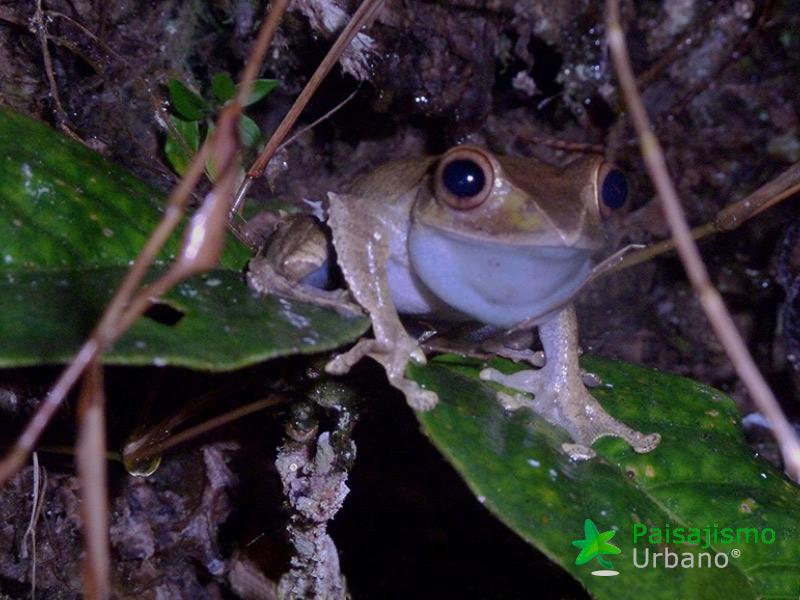 Madagascarreducida38