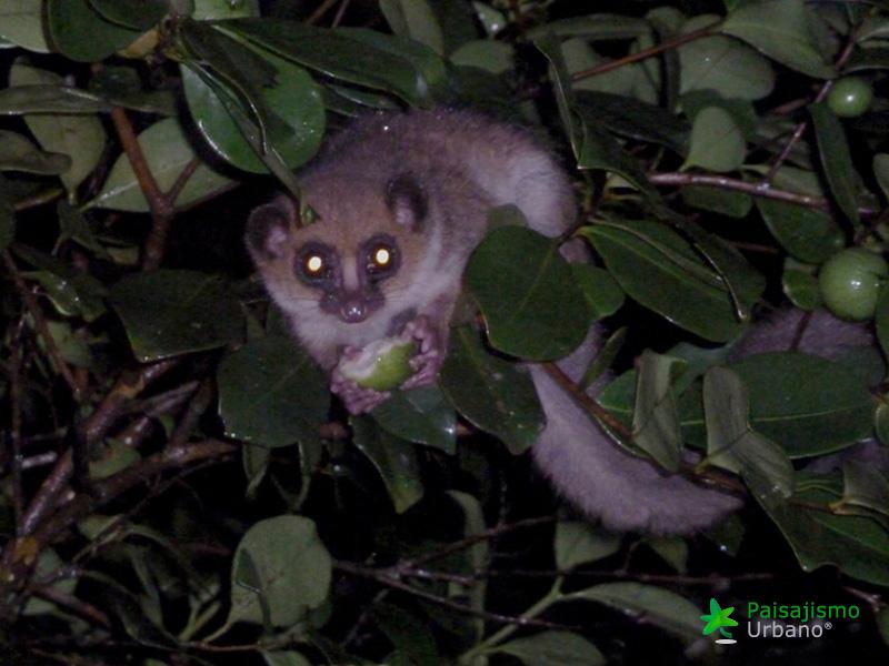 Madagascarreducida39