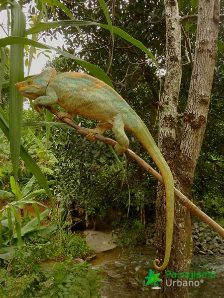 Madagascarreducida49