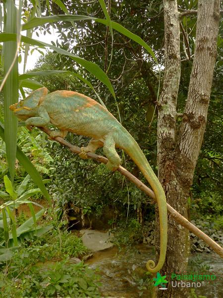 Madagascarreducida50