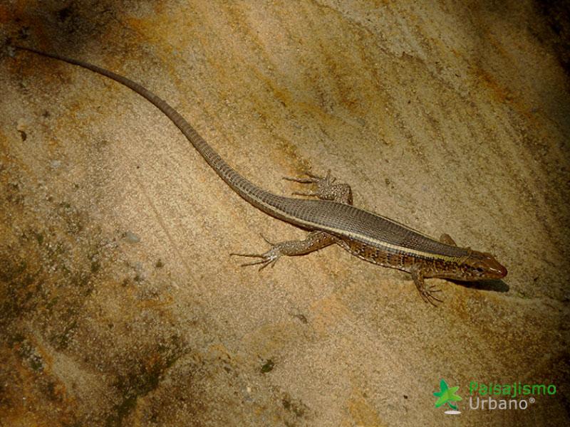 Madagascarreducida58