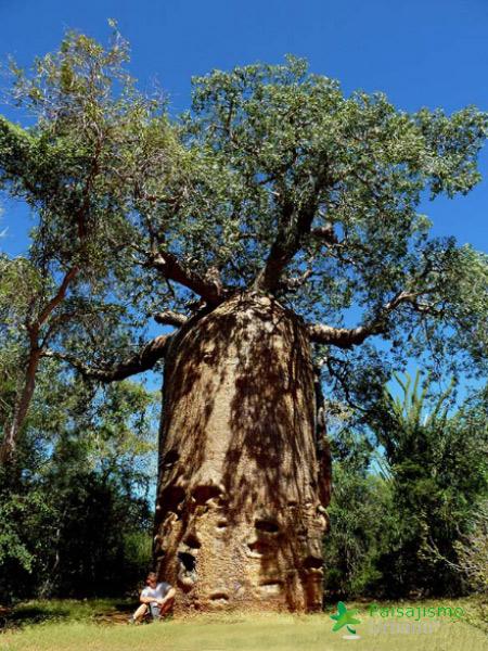 Madagascarreducida60