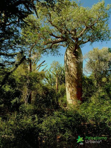 Madagascarreducida64
