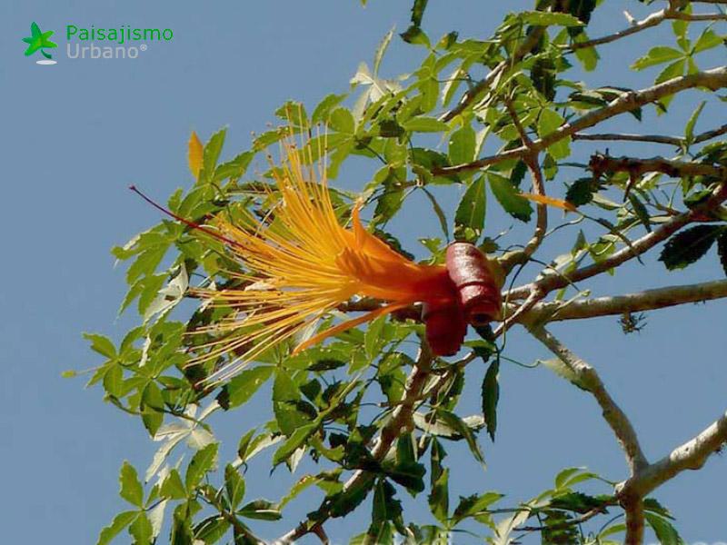 Madagascarreducida7