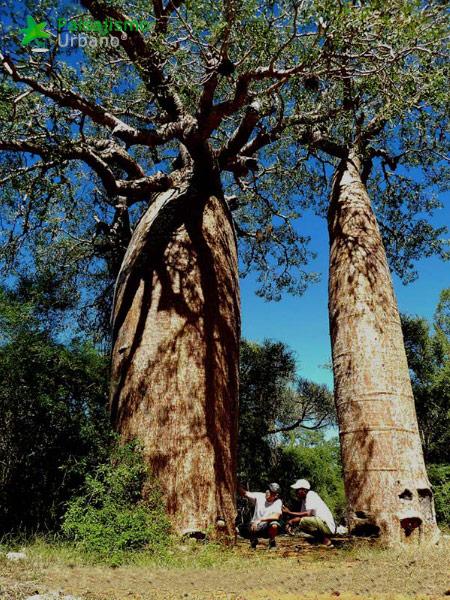 Madagascarreducida8