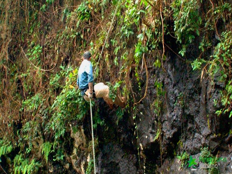 Selva-Misiones-reducida1