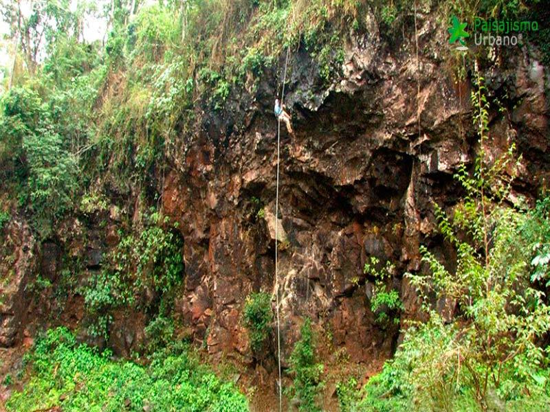Selva-Misiones-reducida2