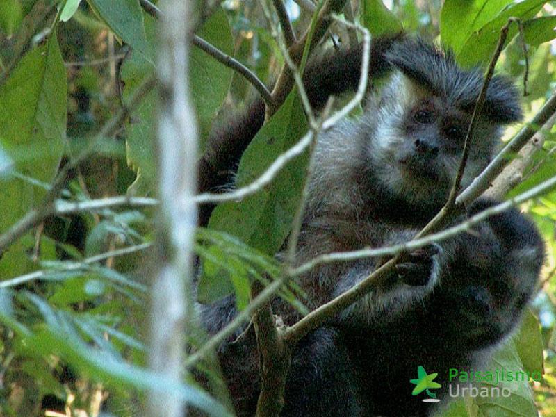 Selva-Misiones-reducida22