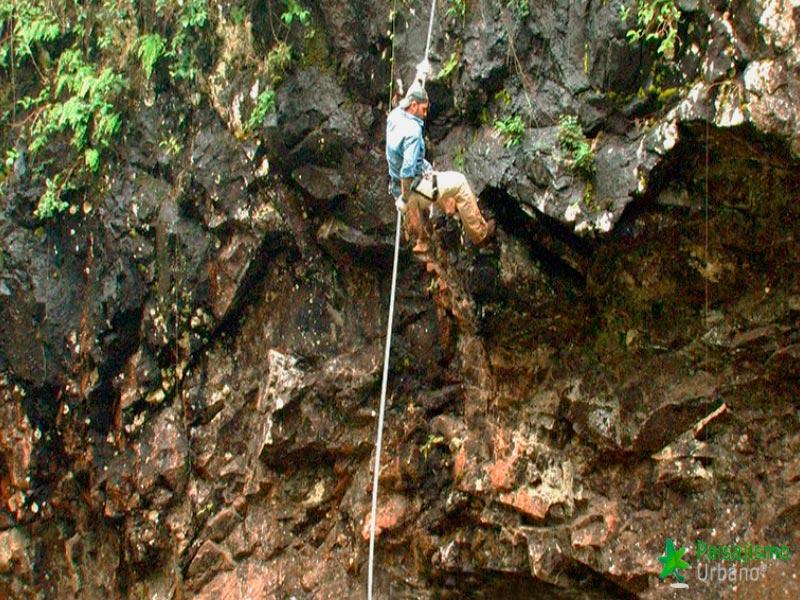 Selva-Misiones-reducida3