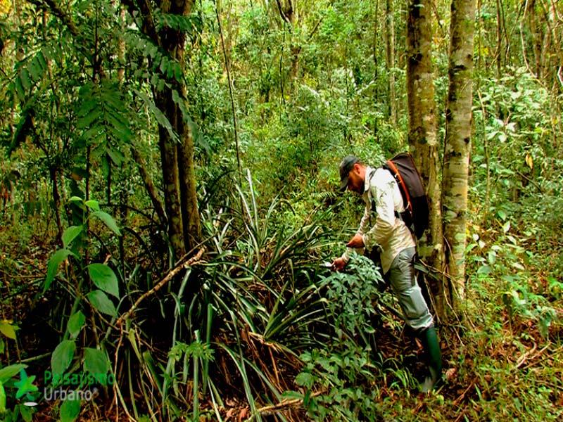 Selva-Misiones-reducida9
