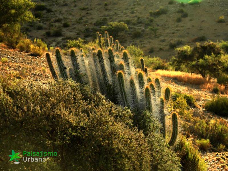 desiertochileno-reducida15