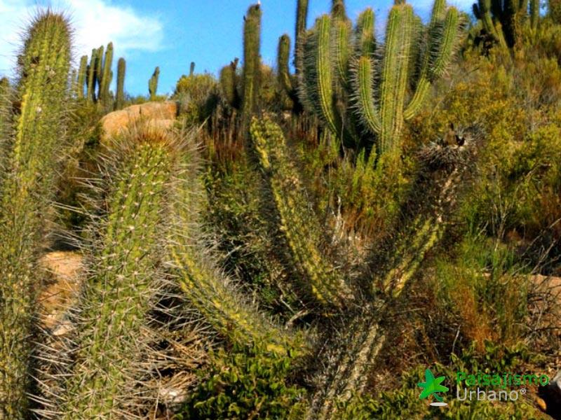 desiertochileno-reducida2