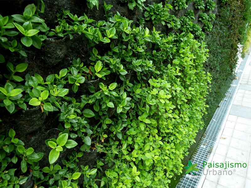 img-fachada-vegetal-paterna-valencia-14