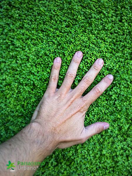 img-jardin-vertical-atico-murcia-15