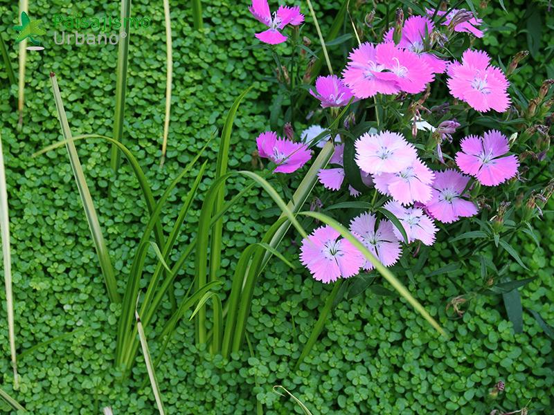 img-jardin-vertical-atico-murcia-18