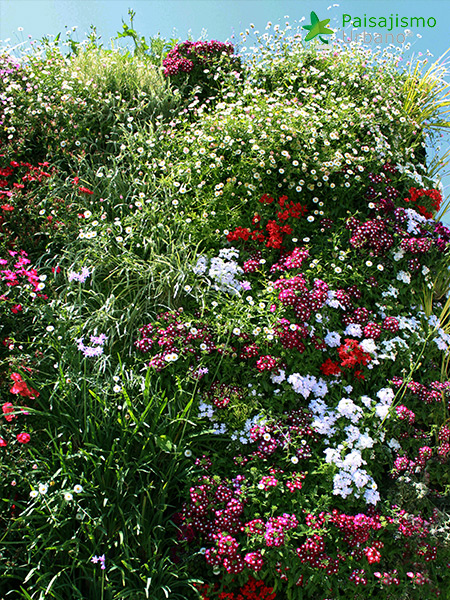 img-jardin-vertical-atico-murcia-22