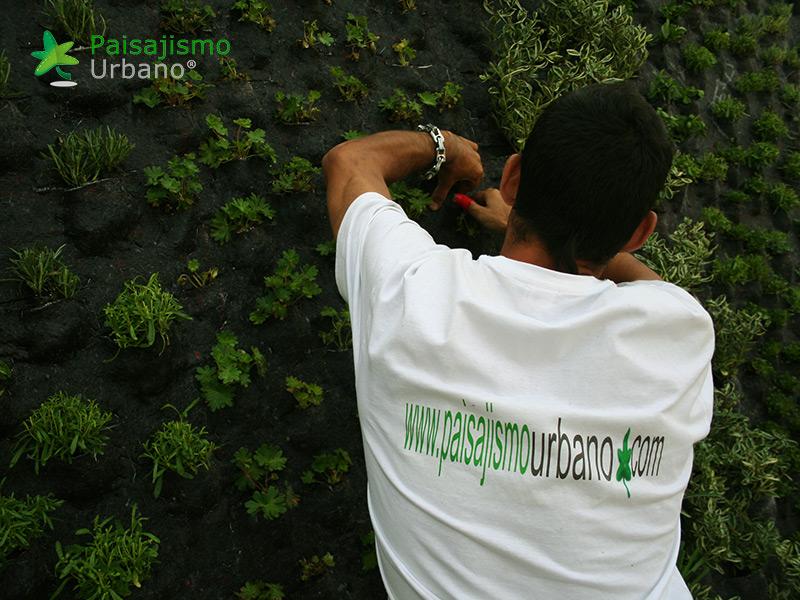img-jardin-vertical-atico-murcia-7