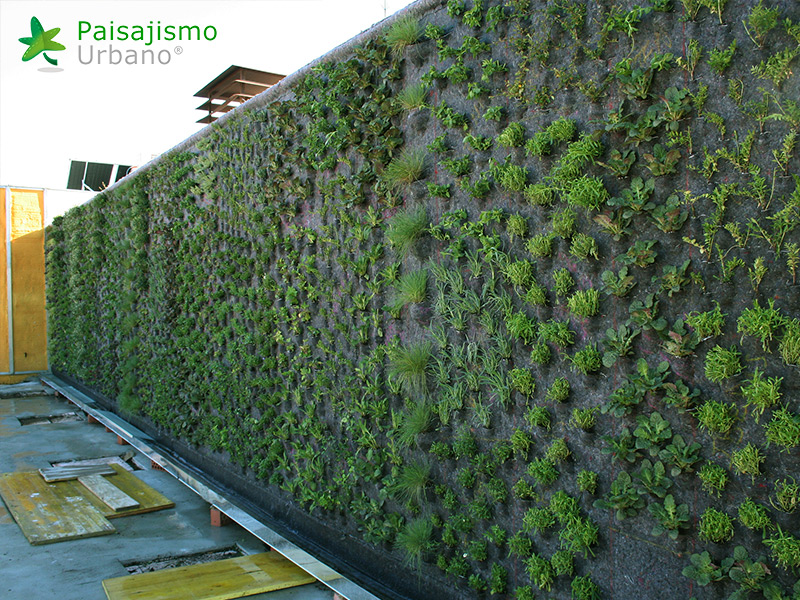 img-jardin-vertical-atico-murcia-9