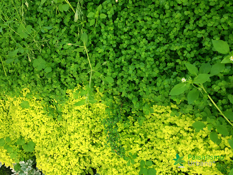 img-jardin-vertical-colmedica-bogota-colombia-8