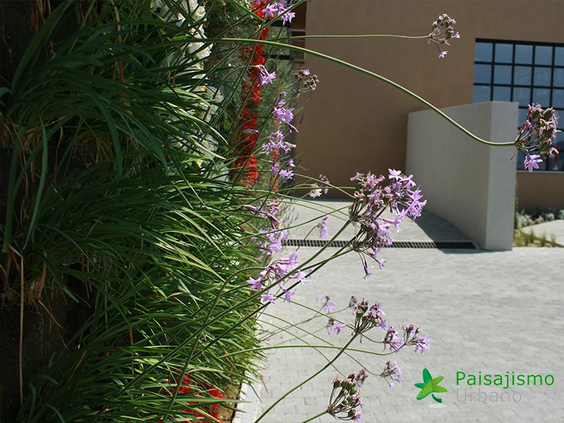img-jardin-vertical-eagles-villas-grecia-7