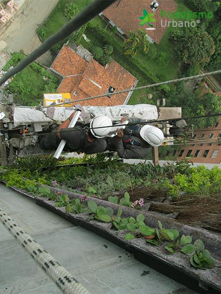 img-jardin-vertical-edificio-green-ecosistema-vertical-medellin-colombia-4