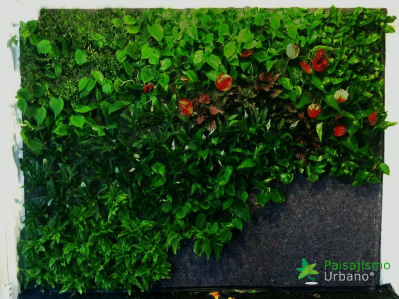 img-jardin-vertical-estudio-pilates-alicante-6