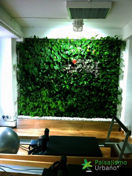 img-jardin-vertical-estudio-pilates-alicante-8