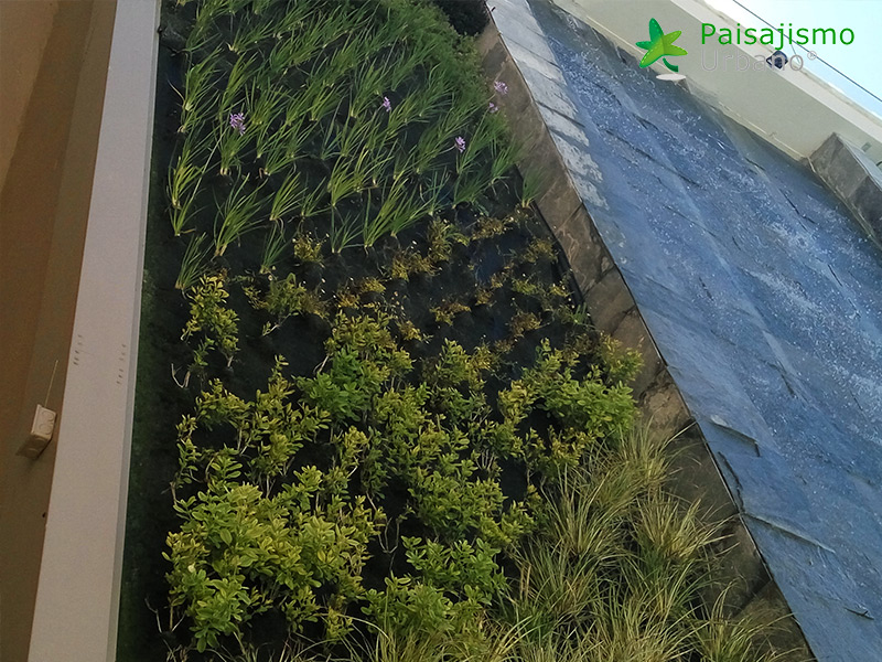 img-jardin-vertical-ikos-oceania-club-grecia-20